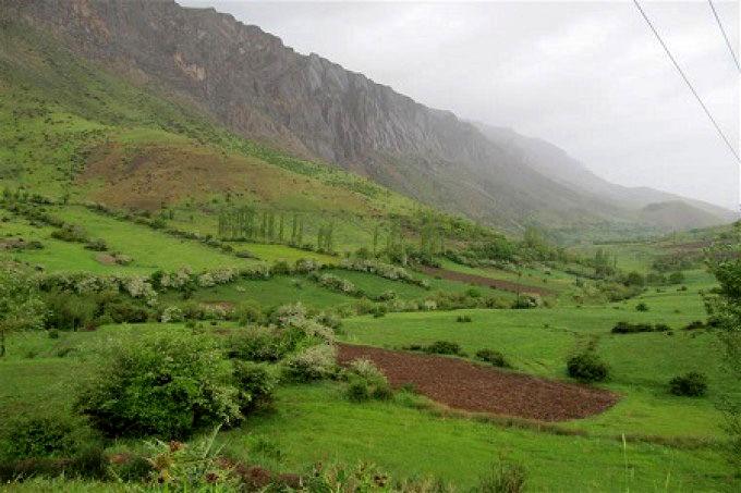 بیش از 2500 هکتار از مراتع شهرستان بروجرد قرق شد
