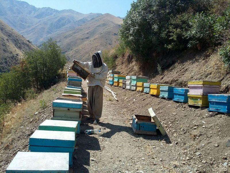 بهره از کندوهای زنبور عسل به منظور انجام عمل تلقیح در باغات میوه و مزارع
