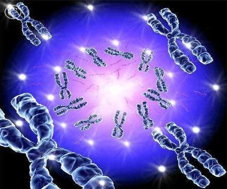 ارائه تکنیکی نوین برای تشخیص ناهنجاریهای کروموزومی در ناباروری مردان