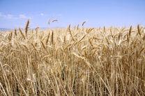 توصیه های 4 روزه هواشناسی کشاورزی
