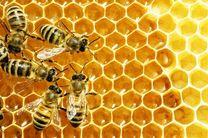 کاهش 50 درصدی تولید عسل در تیران و کرون