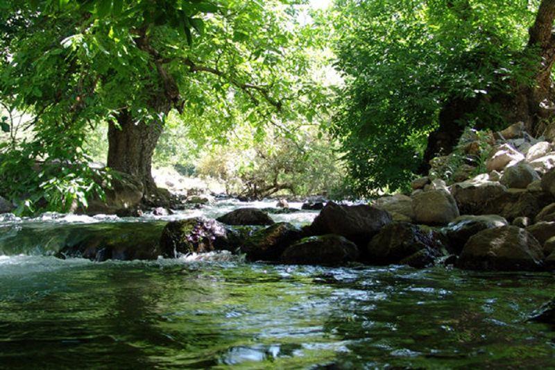 درختان کهنسال منطقه کهمان شهرستان سلسله را می توان ثبت ملی کرد