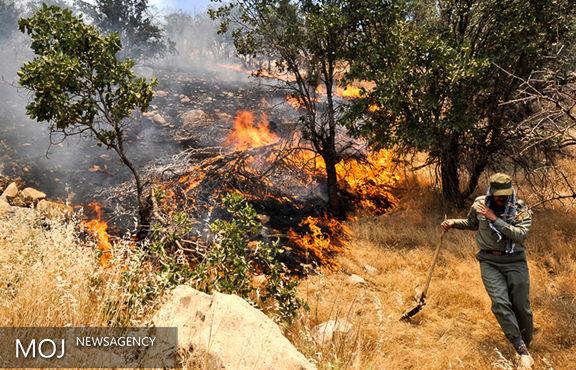 ۳۰ درصد آتش سوزی های جنگل عمدی است