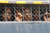 تعداد دستگیر شدگان بنگلادش به ۱۱ هزار تن رسید