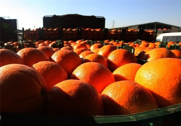 توزیع 800 تن پرتقال و 150 تن سیب در سطح شهر