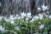 فریدونشهر پر بارش ترین شهرستان در استان اصفهان  / 7 و سه دهم میلی متر بارش