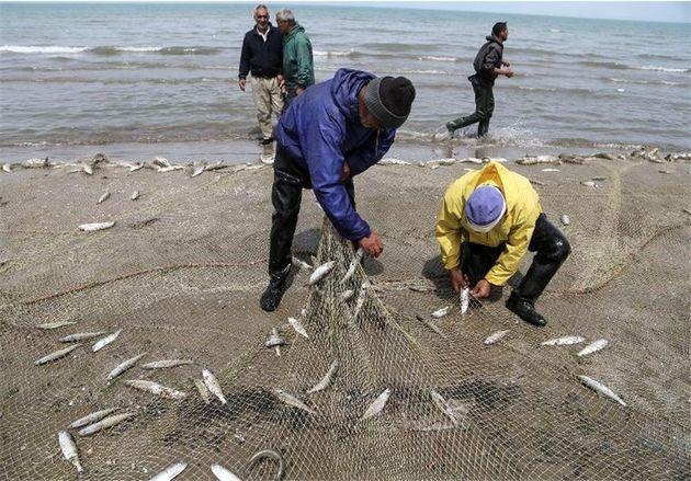 صید بیش از 70 تن انواع ماهیان استخوانی در سواحل رودسر