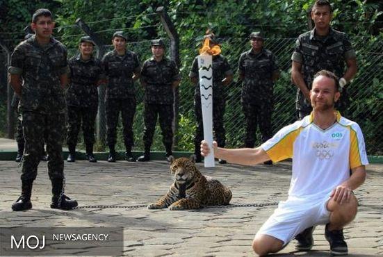 «جگوار» المپیکی را به ضرب گلوله کشتند + تصویر