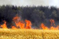 جهاد کشاورزی اردبیل به آتش زدن کاه و کلش مزارع هشدار داد