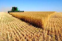 چرا از مافیای گندم در سازمان تعاون روستایی اظهار بی اطلاعی می کنید؟