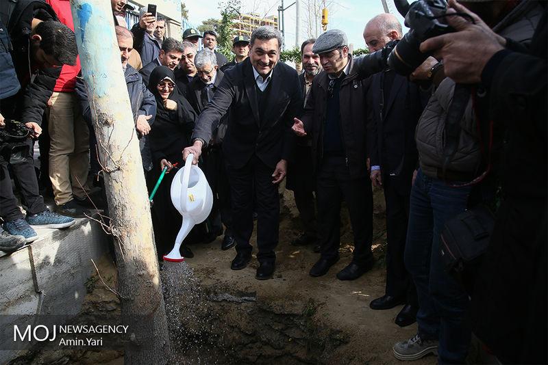 1100 اصله درخت چنار در خیابان ولیعصر غرس می شود