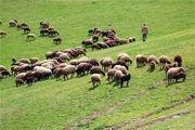 کاهش 70 درصدی تولید علوفه در مراتع و چراگاه های طبیعی خلخال
