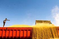 ایران ۳۵ هزار تن گندم از قزاقستان خرید