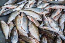 کشف 130 کیلو ماهی غیر بهداشتی  در اردستان
