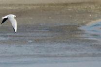 تالاب «گیلارلو» گرمی منطقه شکار ممنوع شد