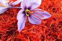 صادرات بیش از ۱۹۲ تن زعفران به ۵۳ کشور دنیا در ۸ ماه نخست سال