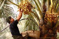 اهدا 560 اصله درخت مثمر مرکبات و خرما در هرمزگان