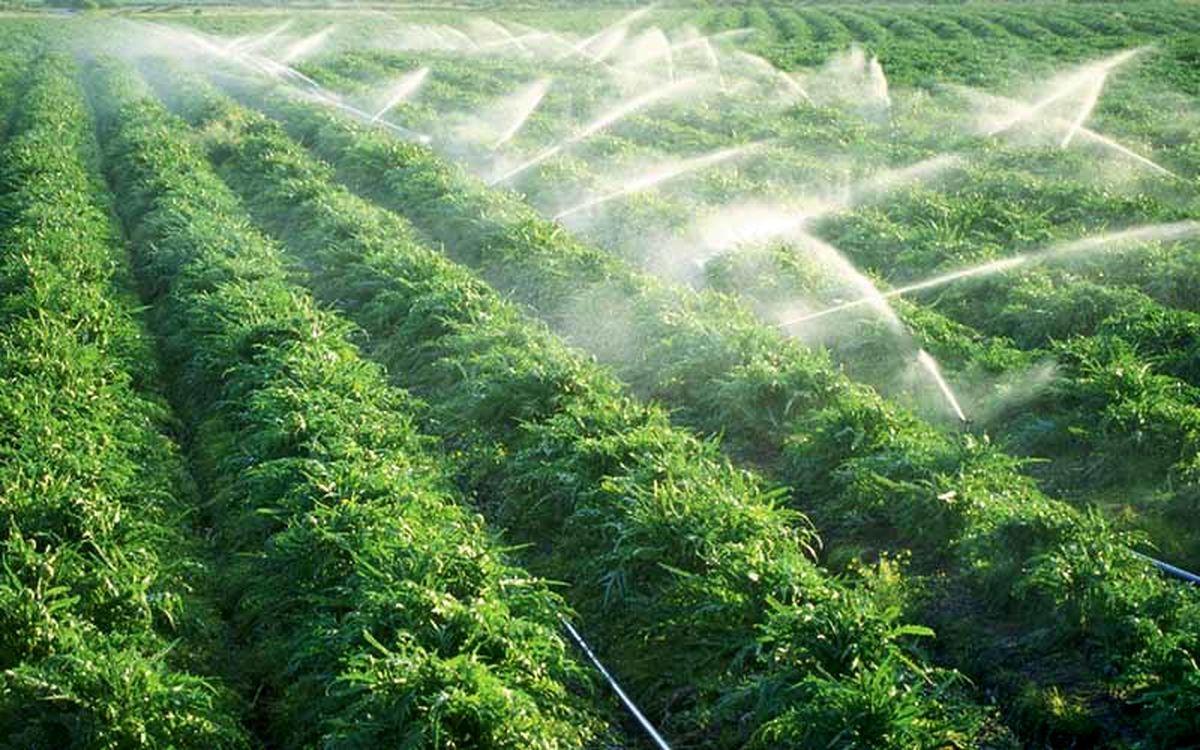 مجهز شدن 126 هزار هکتار از زمین های کشاورزی به شبکه آبیاری نوین در استان اصفهان