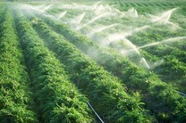 رشد 4 برابری آبیاری نوین در شهرستان آران و بیدگل