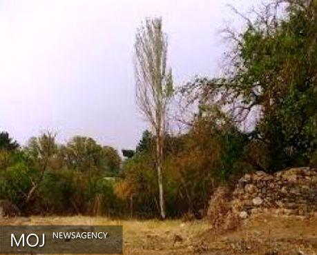 بیش از ۱۵۰ هکتار از زمینهای سراب قنبر به بوستان تبدیل میشود