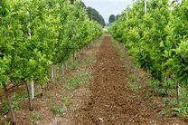 سطح باغات کرمانشاه ۶٫۸ درصد رشد داشته است