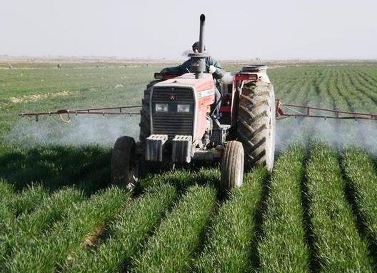 مبارزه شیمیایی در سه هزار هکتار مزارع گندم گلوگاه