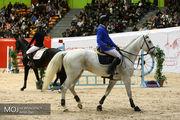 اسب های اصیل ایرانی و عربی در جشنواره ملی به نمایش درآمدند