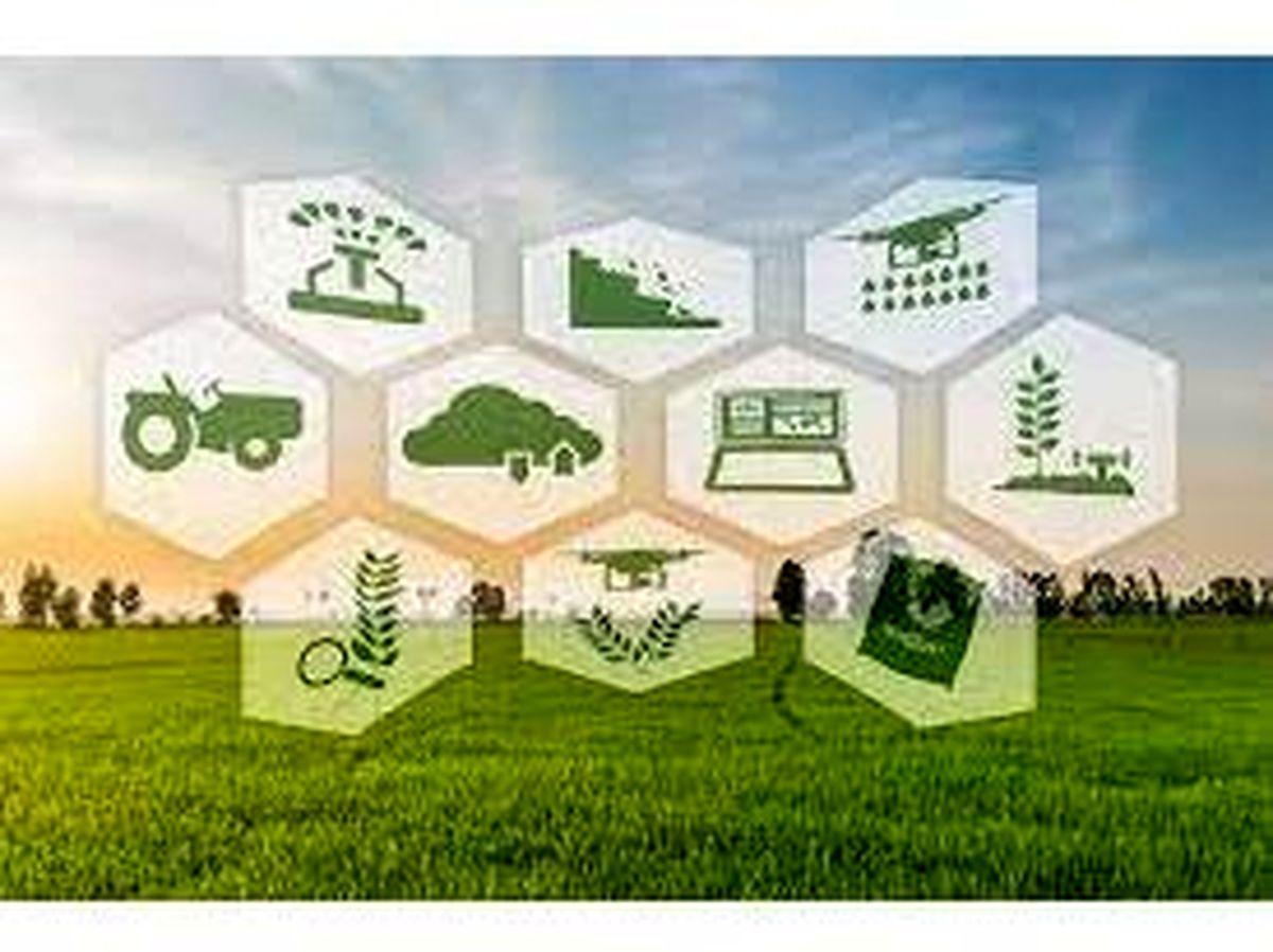 نخستین مزرعه هوشمند شالیزاری در مازندران رونمایی شد