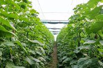 افزایش ۲۰ درصدی در کارایی کشت گوجه فرنگی با فناوری «نانوحباب»