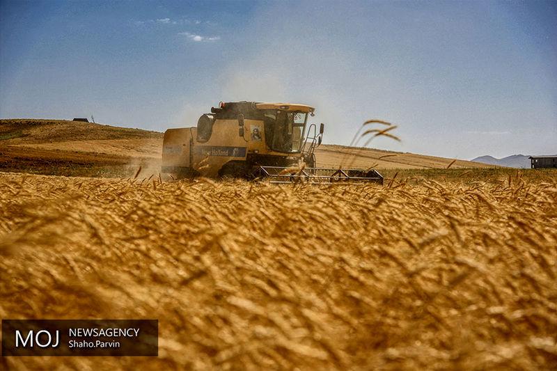 ارزش گندم خریداری شده از کشاورزان به  یک هزار و ۴۴۶ میلیارد تومان رسید