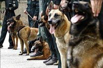 حضور سگهای تجسس پلیس در مناطق زلزله زده کرمانشاه