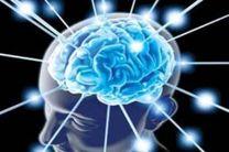 مغز بدون این مواد غذایی فلج می شود