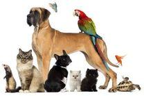 افزایش علاقه مندی به نگهداری سگ و گربه خانگی در دنیا!