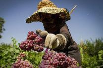 امضا تفاهم نامه ترویج محصولات سالم و استاندارد با مشارکت زنان روستایی و عشایری