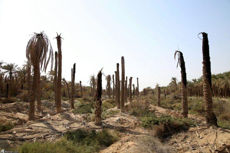 بحران آب و بیکار شدن کشاورزان موجب افزایش متقاضیان تحت پوشش کمیته امداد شادگان شد