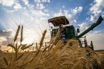 هماهنگی نهادهای کشاورزی برای موفقیت طرح قیمت تضمینی گندم در بورس کالا الزامی است
