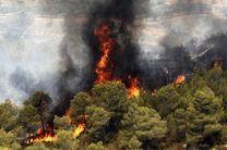 واکنش نمایندگان به بی تفاوتی رییس سازمان حفاظت محیط زیست در قبال آتش سوزی جنگل های زاگرس
