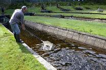 تولید سالانه 4400 تن ماهی در بابلسر