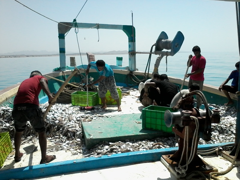 بازگشت لنج های صیادی آب های دور به ساحل جاسک