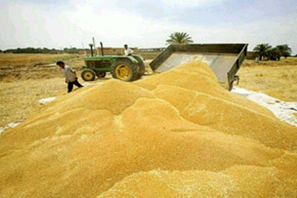 خرید تضمینی ۱ میلیون و ۹۰ هزار تن گندم در گلستان