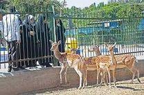 4 مرکز فاقد مجوز نگهداری از حیات وحش پایتخت