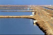 ارز آوری 800 میلیون دلاری اراضی پرورش میگو در هرمزگان