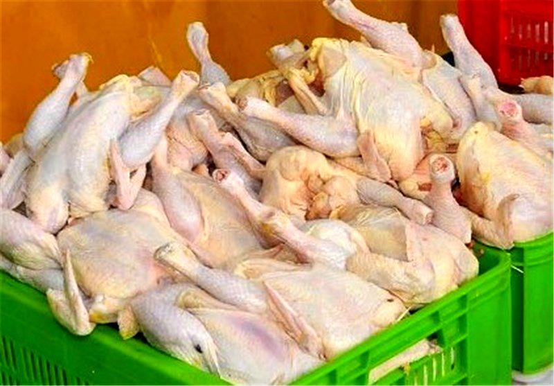 صادرات مرغ آزاد شد
