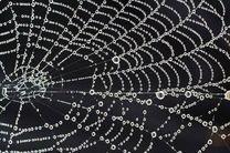 تولید تار عنکبوت مصنوعی از مادهای که 98 درصد آن آب است!