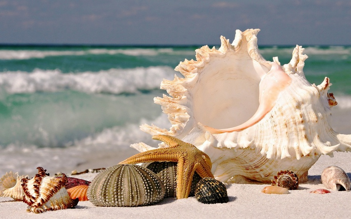 تولید نمایشگر نشکن موبایل از جنس صدف دریایی