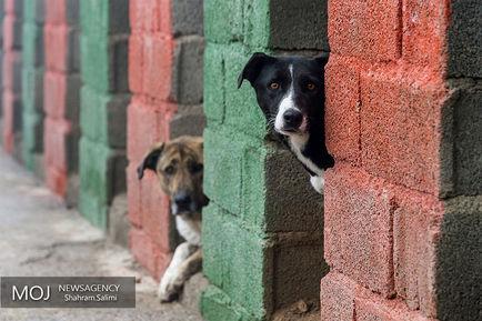 پناهگاه+سگ+های+ولگرد+در+مرکز+وفا (1)