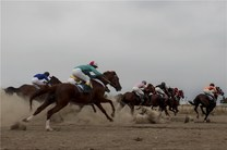 هفته هفتم کورس اسبدوانی تابستانه بندرترکمن برگزار شد