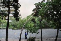 وزش باد شدید در گیلان خسارت جانی نداشت/ آسیب دیدگی سقف چند خانه در برخی شهرها