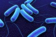 عفونت های ویروسی از باکتریایی با یک آزمایش خون ساده تشخیص داده می شوند
