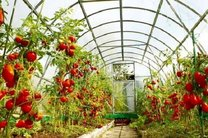 اصفهان در توسعه گلخانه دارای رتبه سوم کشور است